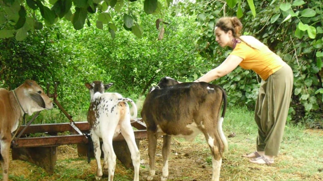 Ranakpur Farm 6