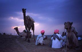 Camel-men.jpg